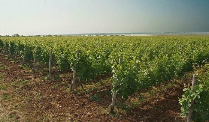 Κρασί, λιμνοθάλασσα και… η οικογένεια Σγουρίδη